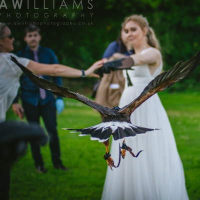 The British Bird of Prey Centre has helped couples celebrate their weddings during the pandemic