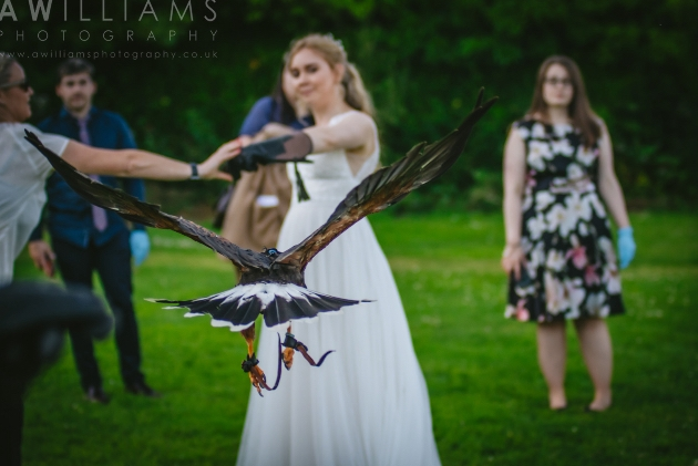 The British Bird of Prey Centre has continued to help couples celebrate their weddings during the pandemic