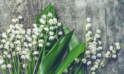 Artificial Floral Supplies